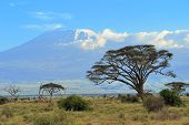 image of kilimanjaro  - Snow on top of Mount Kilimanjaro in Amboseli - JPG