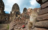 stock photo of macaque  - Lopburi Thailand - JPG