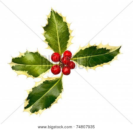 Holly Leaf Corner