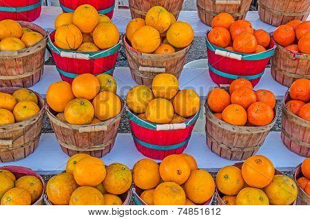 Baskets Of Honeybell Oranges