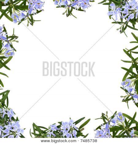 Rosemary Herb Flower Border