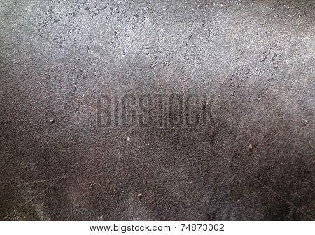Tapir Texture