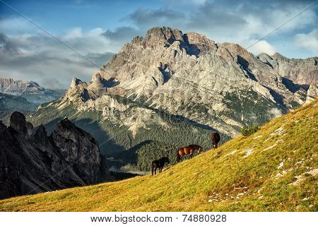 Italy Dolomites - wonderful landscapes horses graze near the barren rocks