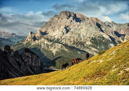 Italy Dolomites - wonderful landscapes horses graze near the barren rocks