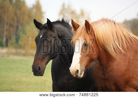 Two Beautiful Horses Portrait In Autumn