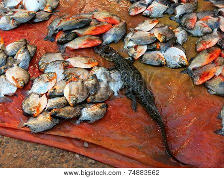 Market Fish & Caiman