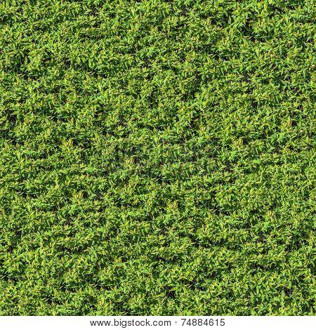 Green Leafy Bush. Seamless Texture.