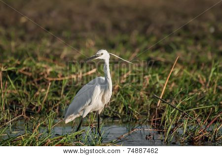 Egret By The Water