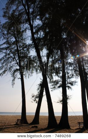 silhouette of trees on the beach