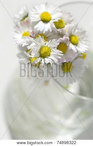 Beautiful daisies on the glass