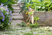 pic of planters  - Shallow depth of field view of a garden path with wooden planter in the foreground - JPG