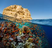 stock photo of under sea  - Split shot of the bright coral reef in Ras Mahammad National Park - JPG