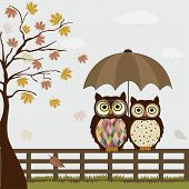 stock photo of bird fence  - Cute owls on a fence in autumn - JPG