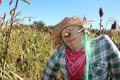 picture of scarecrow  - Scarecrow - JPG