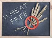 picture of universal sign  - Wheat free handwritten on a blackboard with a red universal no sign on wheat spikes - JPG