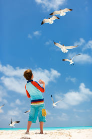 pic of flock seagulls  - Little boy and a flock of seagulls at Caribbean beach - JPG