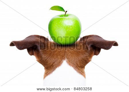 Dog And Apple