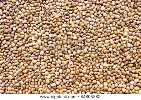Brownish variety of Cowpeas background