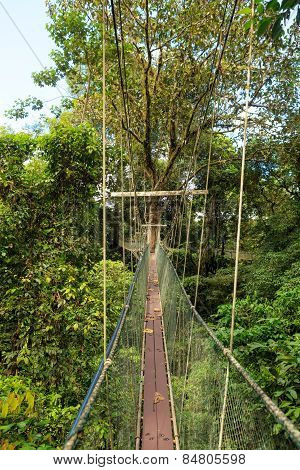 Canopy walk at gunung mulu national park