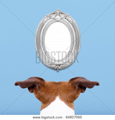 Dog Watching A Frame