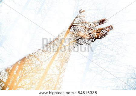 Double exposure arm and hand
