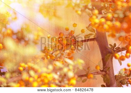 Beautiful rowanberry background, grunge style photo of many little yellow berry on the tree in bright sun light, beauty of nature