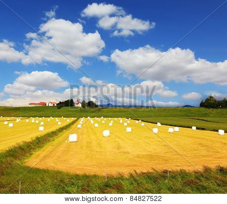 Big field with haystacks. The farm and different economic constructions is in the distance visible. Rural pastoral after harvesting
