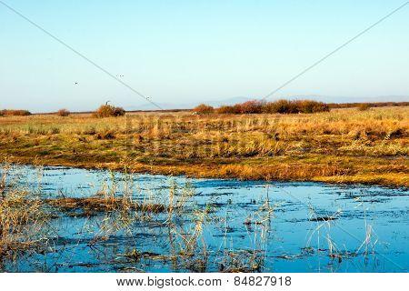Wetlands Seagull
