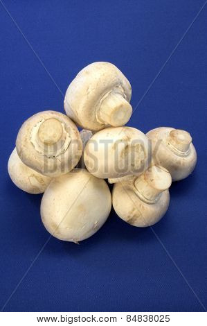 Mushrooms stacked against blue background