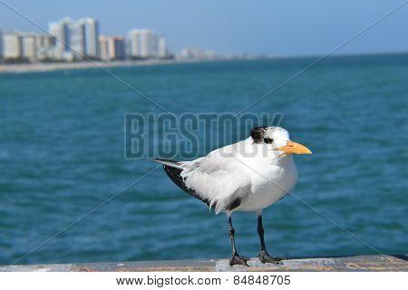 Water Bird and Ocean