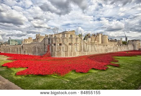 LONDON, UK - AUGUST 22, 2014 - Some of the 888,246 ceramic poppies that commemorate the British and colonial military who died in the 1914-1918 First World War outside the Tower of London.