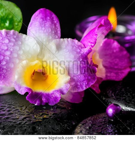Spa Concept Of Orchid Flower, Zen Basalt Stones With Drops, Lilac Candle, Bead, Closeup