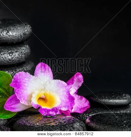 Spa Concept Of Orchid Flower, Green Leaf, Pyramid Zen Basalt Stones With Drops, Closeup