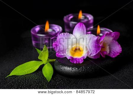 Spa Concept Of Purple Orchid Dendrobium, Twig Bamboo With Dew And Candles On Black Zen Stones, Close