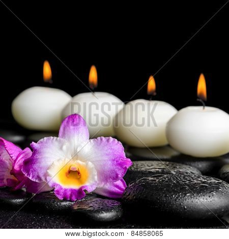 Spa Still Life Of Purple Orchid Dendrobium With Dew And Row White Candles On Black Zen Stones, Close
