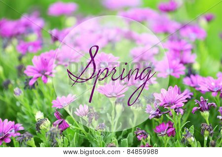 Beautiful flowers in garden. Hello Spring concept