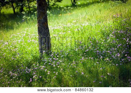 Field Background With Wild Flowers