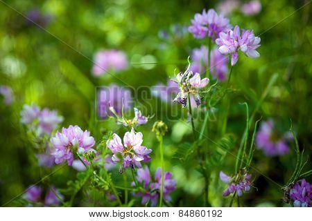Medicinal Wild Spring Flowers Field
