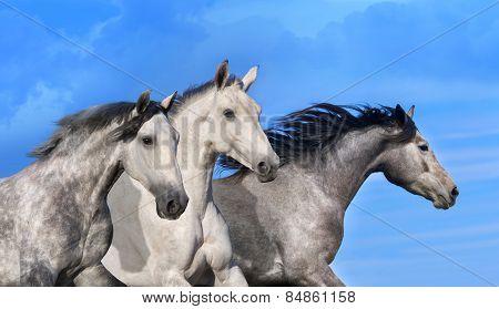 Horse group portrait