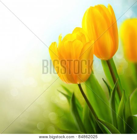Easter Spring Flowers bunch. Beautiful yellow tulips bouquet. Elegant Mother's Day gift over nature green blurred background. Springtime.