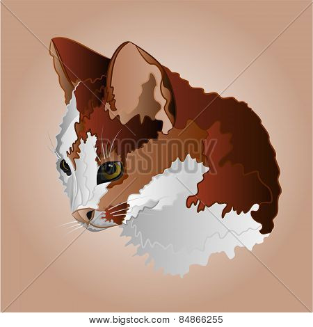 Color Kitty Head Vector