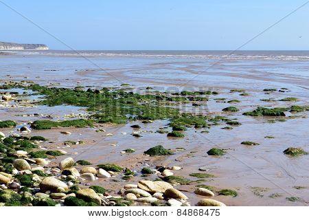Low tide in the Bay