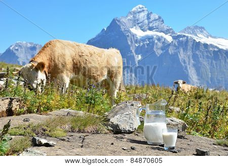 Cows and milk. Switzerland