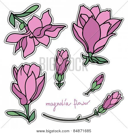 Set of bright magnolia flower stickers