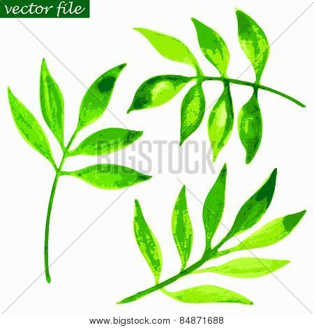 Abstract green foliate watercolor vector