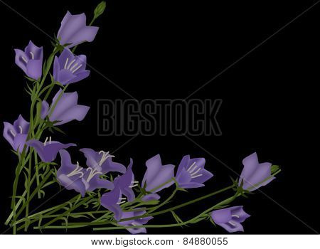 illustration with bunches of lilac flowers isolated on black background