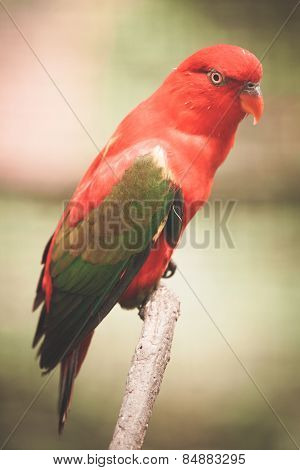 Portrait of a brightly colored parrot. Toned