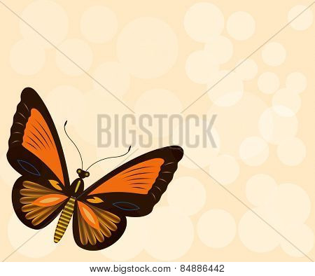 Beige background with butterfly and copy space.