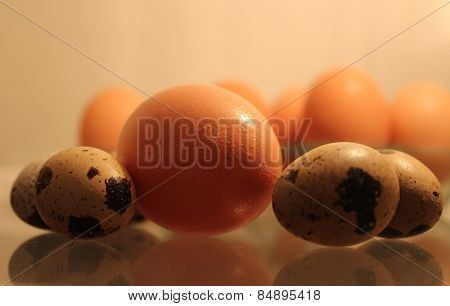 Fresh chicken and quail eggs ready to cook.