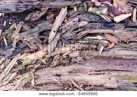 Weathered and cracked wood surface texture